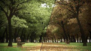 پلاگین ITOO FOREST PACK PRO 6.3.0 برای مکس ۲۰۱۲-۲۰۲۱